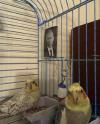 putin, birds.png