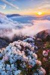 Bergen bloemen.jpg