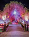 Japan Travel We often describe places as magical, mind-blowing, phenomenal, or amazing – and ….jpg