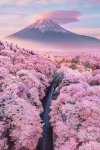 15 Truly Astounding Places To Visit In Japan.jpg