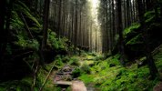 thick_forest_5k-3840x2160.jpg