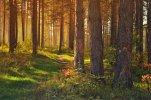 forest-89179_1920.jpg