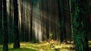 forest-grass-nature-158251_1920x1080.jpg