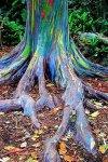 Growing Rainbow Trees.jpg