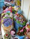 Succulents Planter - Indoor, Outdoor & DIY Options.jpg