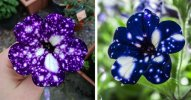 Stunning Galaxy Flowers Look Like They Hold the Universe in Their Petals.jpg