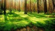 1150206-forest-wallpaper-hd-1920x1080-ipad-pro.jpg