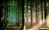 1150758-download-forest-wallpaper-hd-1920x1200-for-ios.jpg