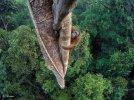 Nature Orangutan Image 1.jpg