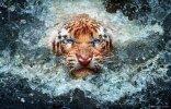 Nature Tiger Image 1.jpg