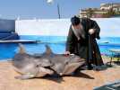 dolfijnen zegening.png