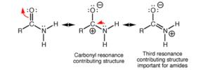 amide-carbonyl-resonance.png