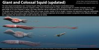 giant_squid_and_colossal_squid_size_by_harry_the_fox_dcnjrxw-fullview.jpg