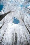 eBaum's Premium Image Collection.jpg