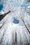 eBaum's-Premium-Image-Collection.jpg