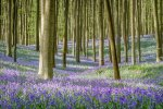 belgium-flower-spring-color-outdoor-nature.jpg