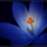 Echo Blue